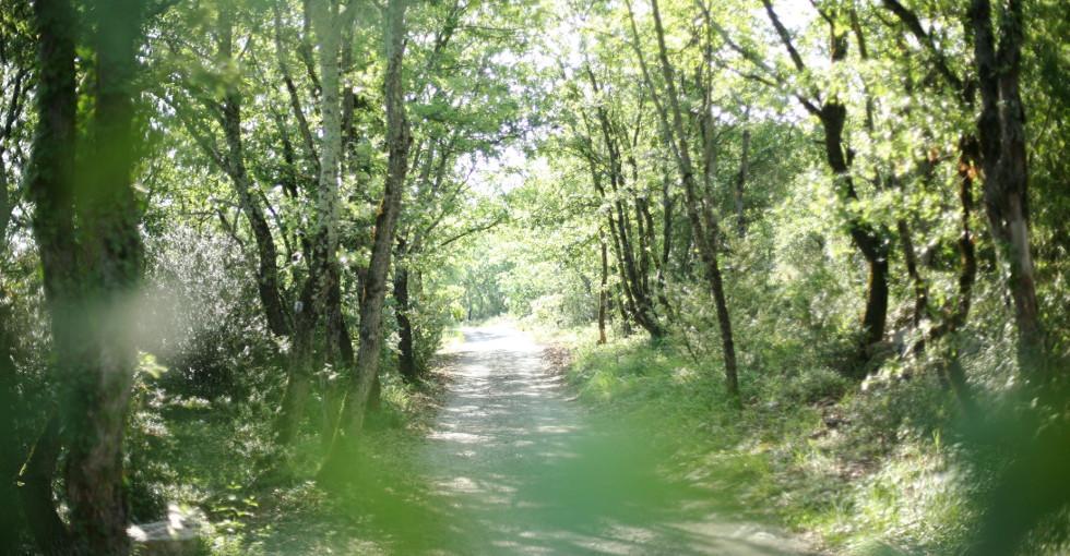 locations de vacances au milieu des chènes - Gites les Princes - 07200 Lanas - Ardèche